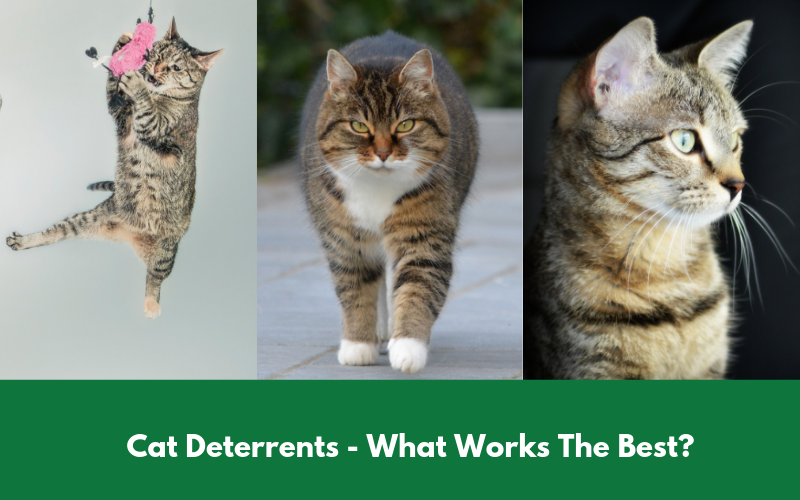 Cat Deterrents - What Works The Best?