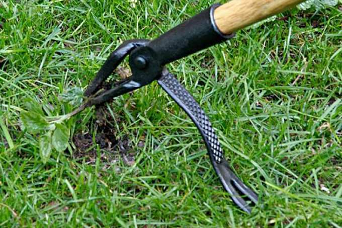 How to Buy the Best Weed Removal Tool