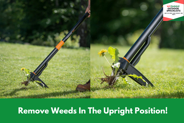 Remove Weeds In The Upright Position!