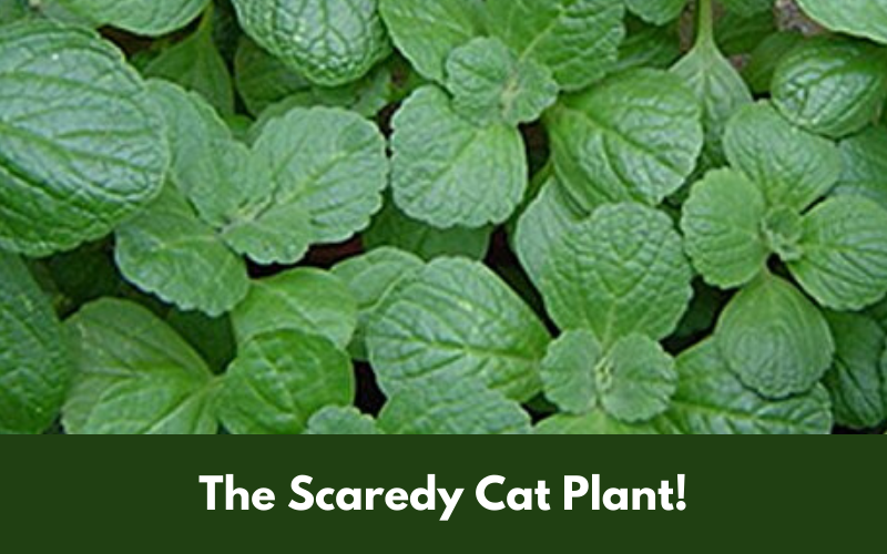 The Scaredy Cat Plant!