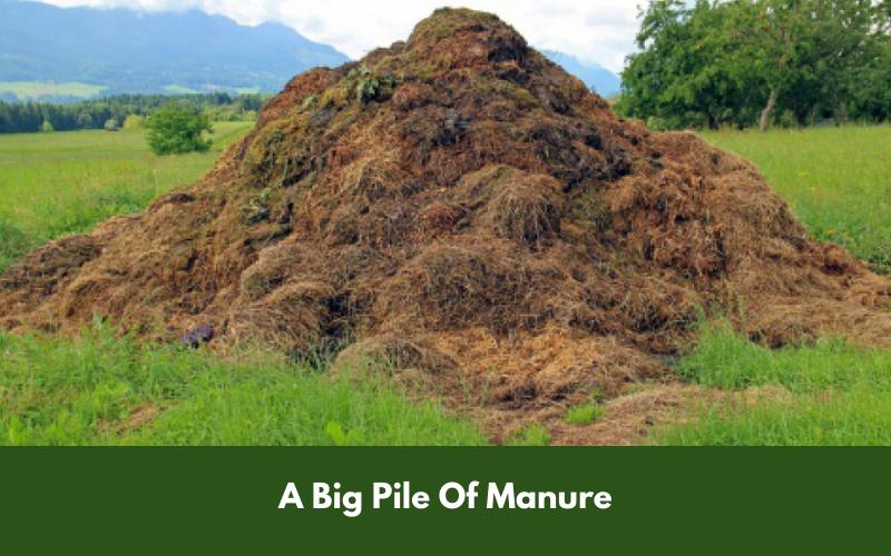 A Big Pile Of Manure