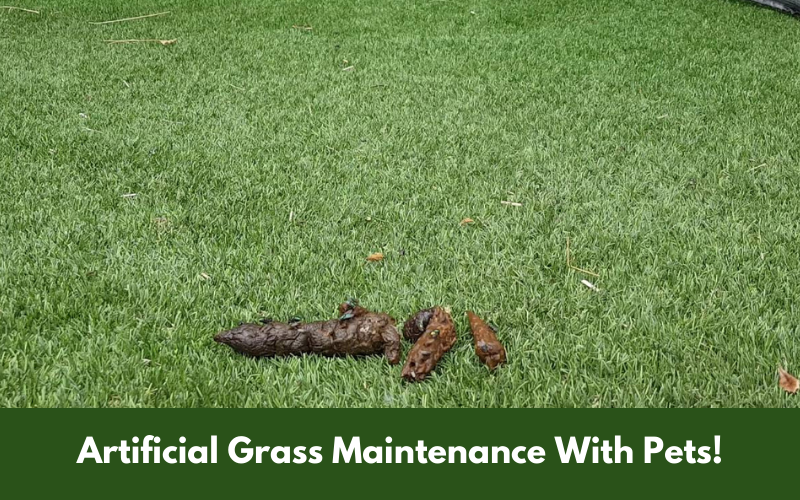 Artificial Grass Maintenance With Pets!