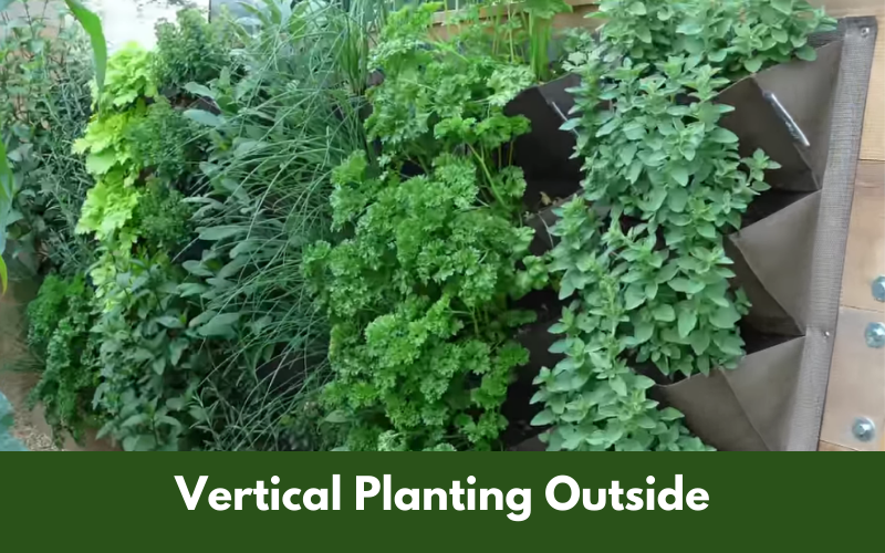Vertical Planting Outside