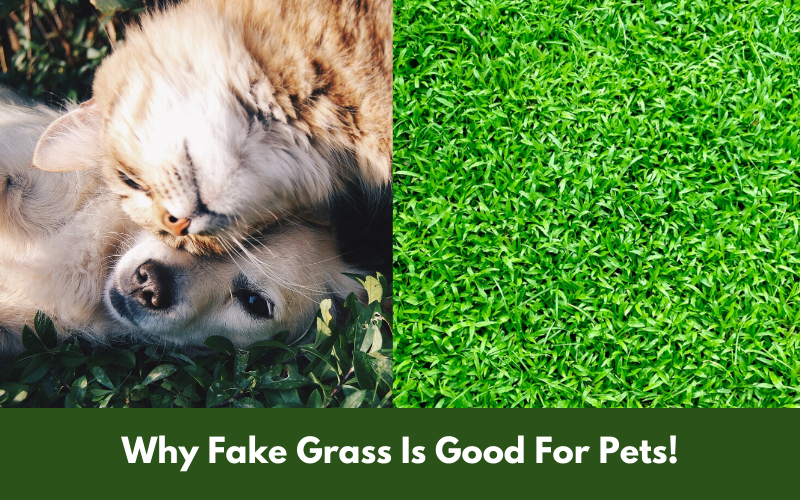 Why Fake Grass Is Good For Pets!