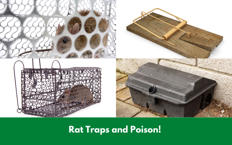 Rat Traps and Poison
