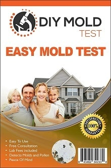 Mold Inspection Network DT-28356