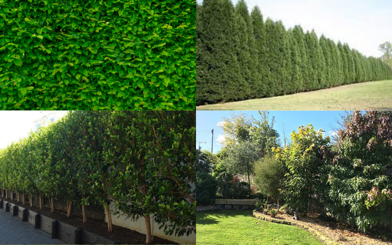Bushes and Tree Garden Screens