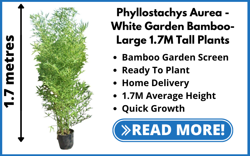 Fast Growing Garden Screens