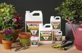 Best Rooting Hormones
