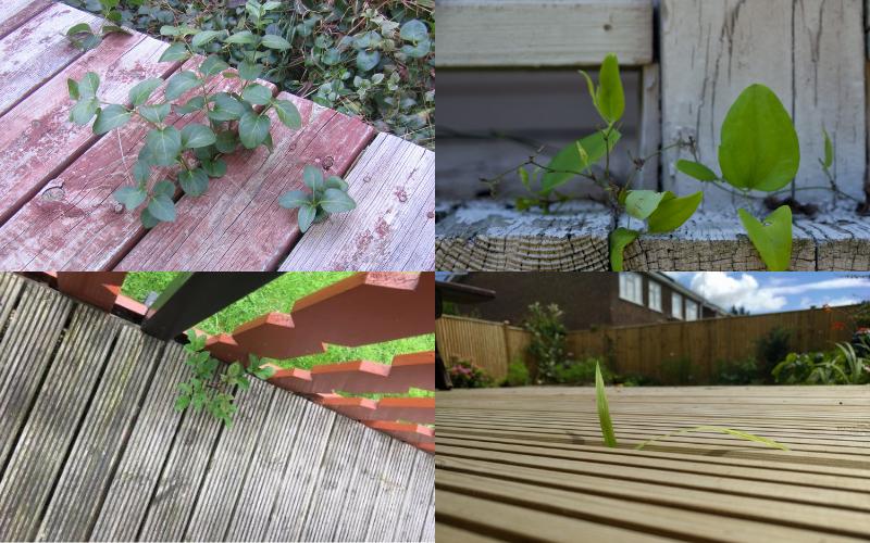 Weeds and Garden Decking