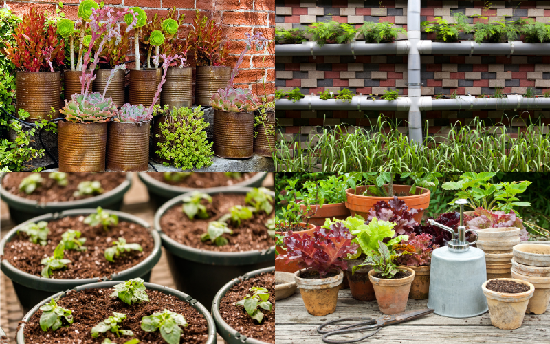 Container Gardening - The Basics