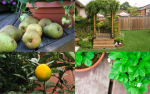 Growing Fruot On Your Decking - Examples
