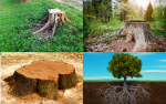 Tree Stumps And Root System - Example