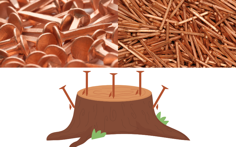 Using Copper Nails On a Tree Stump - Example
